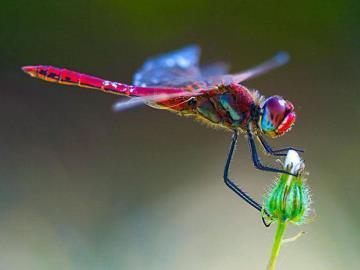 Что значит если на человека села стрекоза или бабочка народные приметы