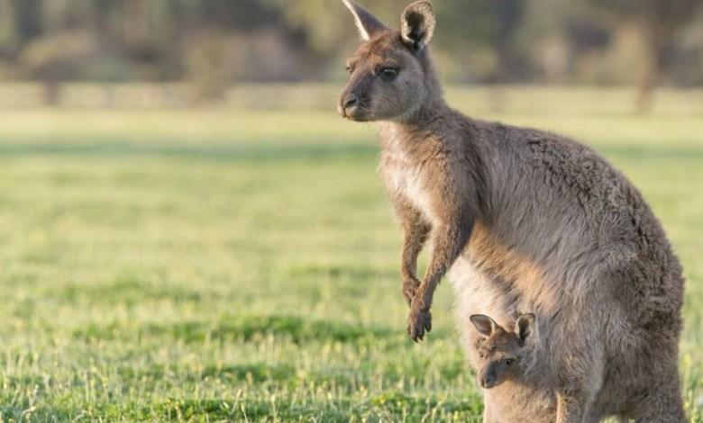 Saiba 5 Curiosidades Incríveis Sobre a Austrália