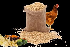 Image symbolisant le rendement de l'élevage des volaoilles