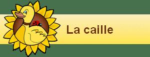 bannière widgets la caille