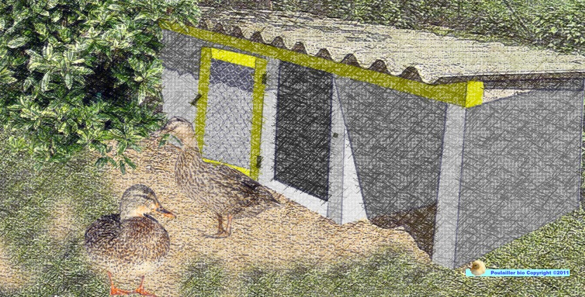 construire une cabane pour les canards poulailler bio. Black Bedroom Furniture Sets. Home Design Ideas