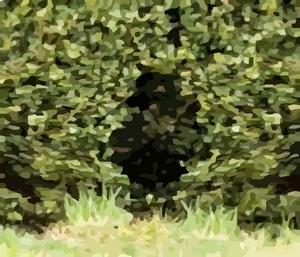 coulée de renard dans un buisson