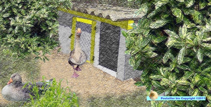 exemple de cabane abri pour les oies