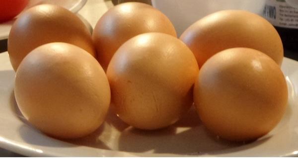 oeufs de grosses poules