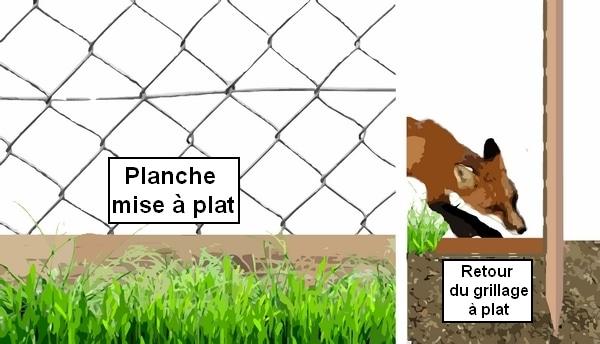 système pour empécher le renard de pénétrer dans le poulailler