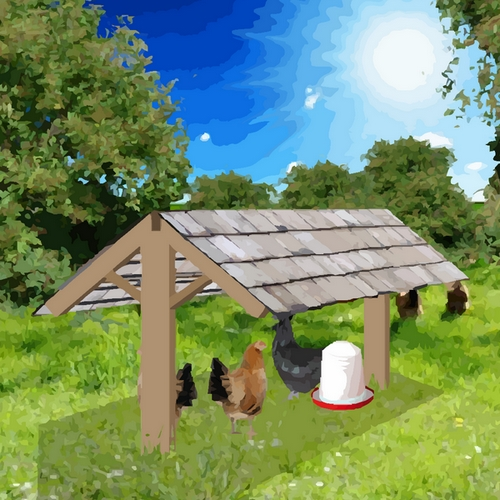 Cet abri en bois facile à construire, sert de refuge aux poules pour se protéger des ardeurs du soleil.