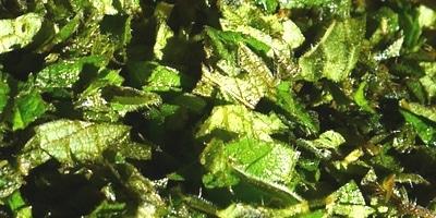L'ortie est grossièrement hachée et mélangée à du son et des grains concassés
