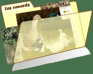 les fiches de la basses-cour bio - canards