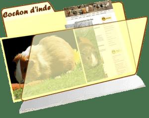 les fiches de la basses-cour bio - cochon d'inde