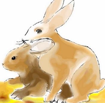 accouplement des lapins