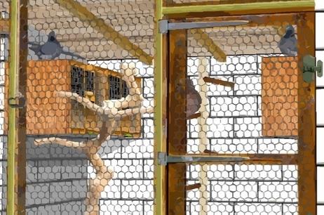 intérieur de pigeonnier