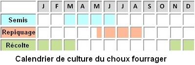 calendrier de culture du choux fourrager