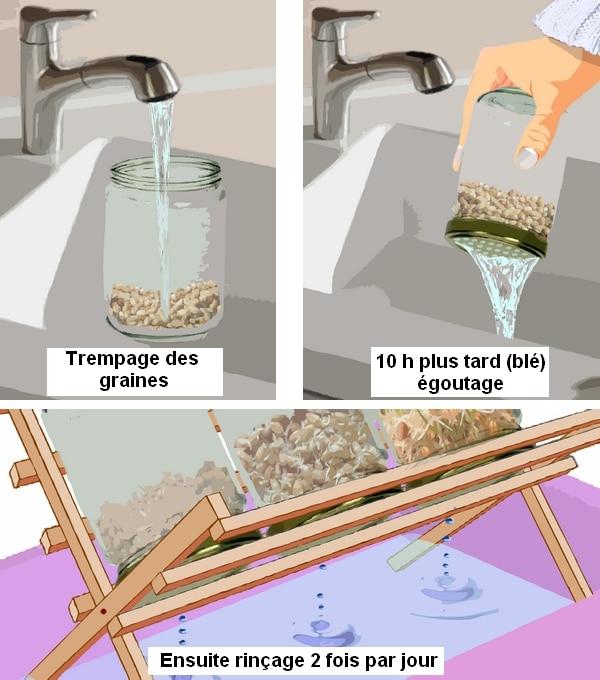 graines germ es pour les poules poulailler bio. Black Bedroom Furniture Sets. Home Design Ideas