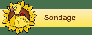 bannière widgets sondage122
