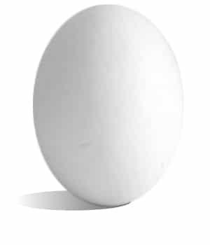 oeuf blanc de leghorn