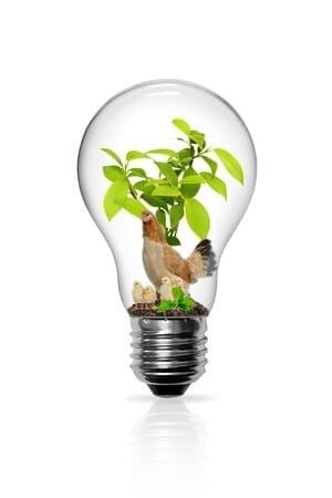 ampoule idée astuce poulailler