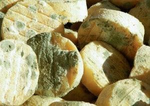 fromages-de-chevre-secs