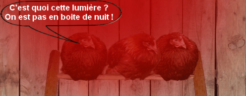 poules-avec-eclairage-infrarouge