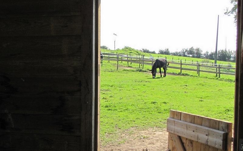 abri pour âne vu de l'intérieur