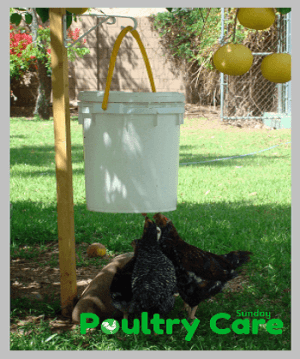 Automatic-Chicken-Waterer-Step-Four