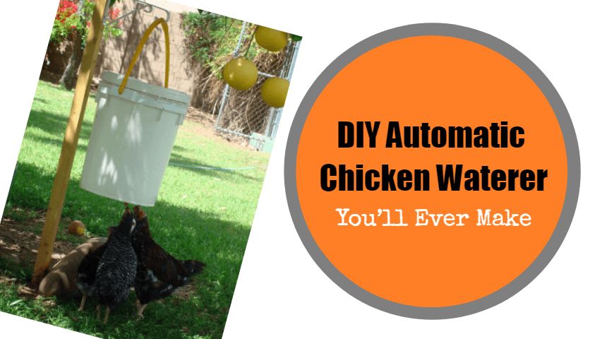 Automatic-Chicken-Waterer