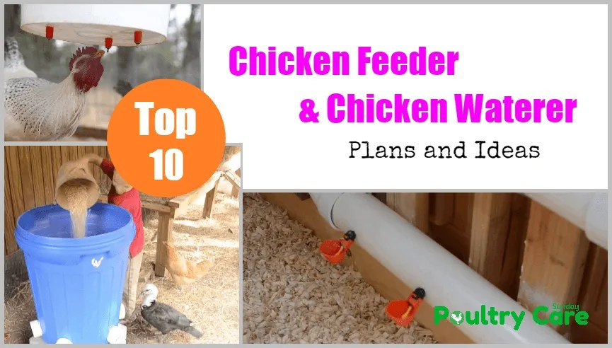 DIY-Chicken-Feeder-and-Waterer-Plans