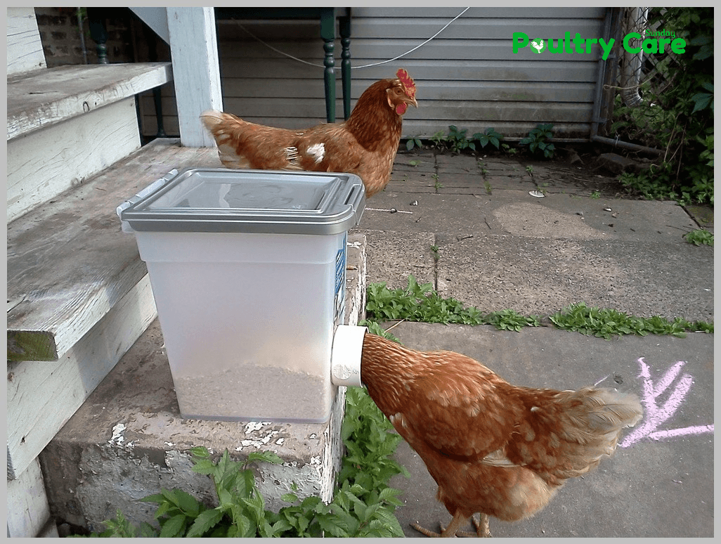 No-Mess-Chicken-Feeder