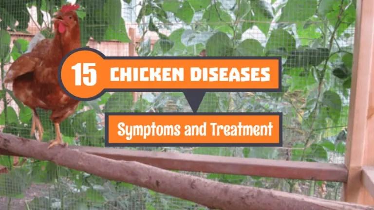 Chicken-Diseases