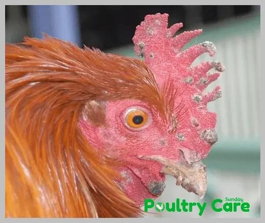Fowl-Pox