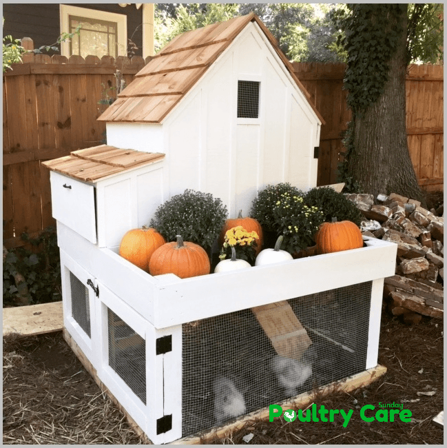 Ana White Small Chicken Coop