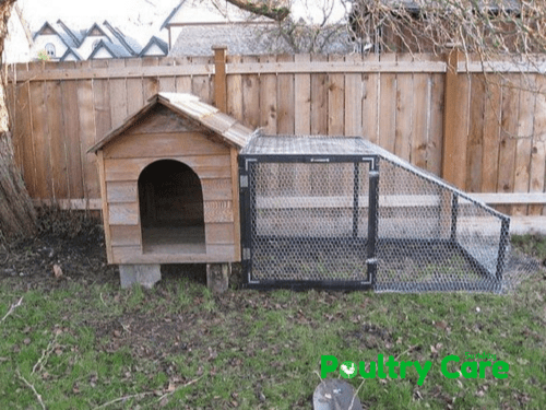 Old Dog House Chicken Coop