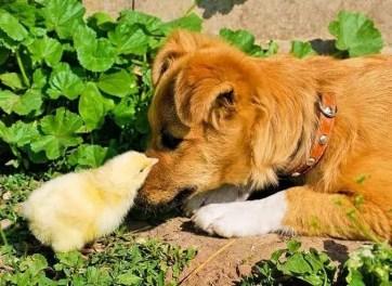 PoultryCareSunday-Home