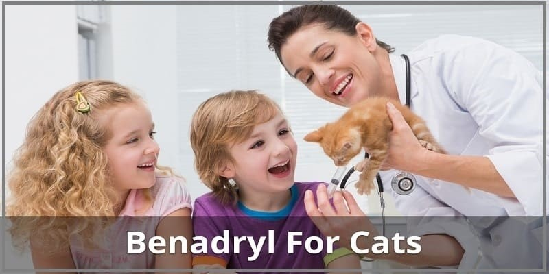 Benadryl Dosage for Cats | Can You Give It For Allergies, Itching, Or Sedation?
