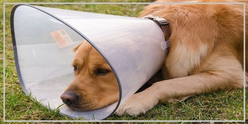 Lower Hot Spot Discomfort On Dogs