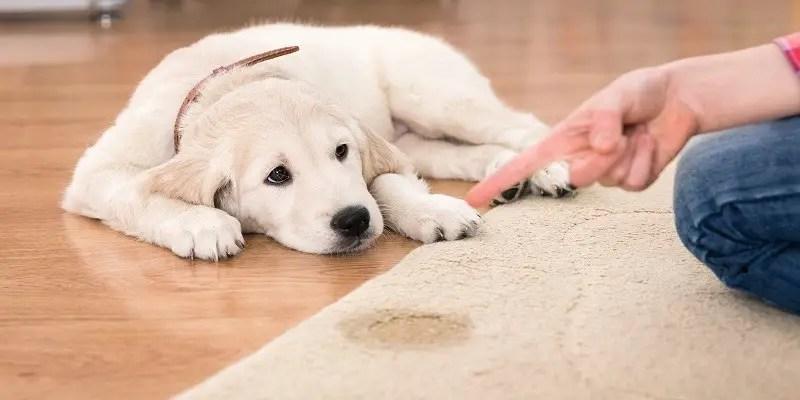 Pet Carpet Cleaning
