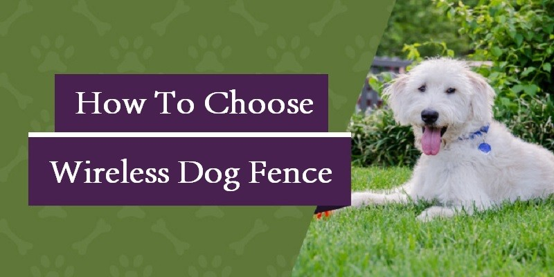 How To Choose A Wireless Dog Fence [Ultimate Guide]