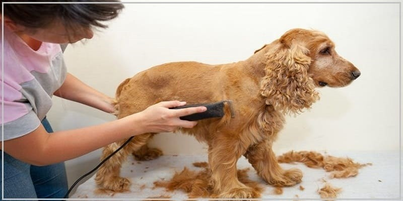 How To Use Dog Grooming Clippers