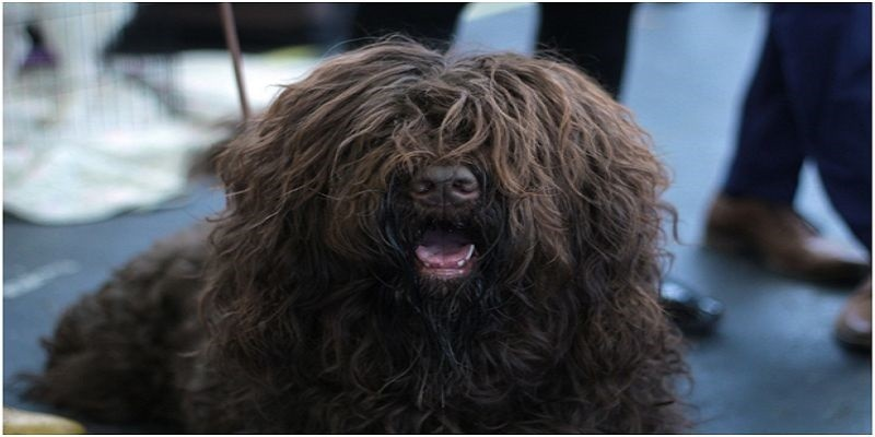 Matted Dog Hair Remedy