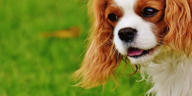 Tips to Take Care of Your Dog