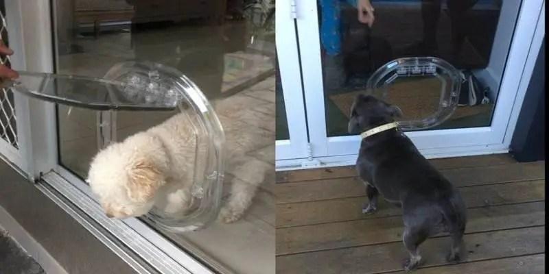 How to Choose the Right Pet Door