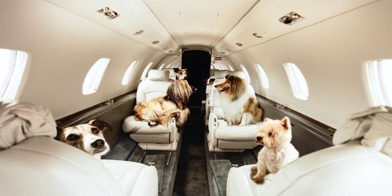 Transport Your Pets On Air