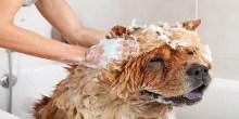 Wash a Dog