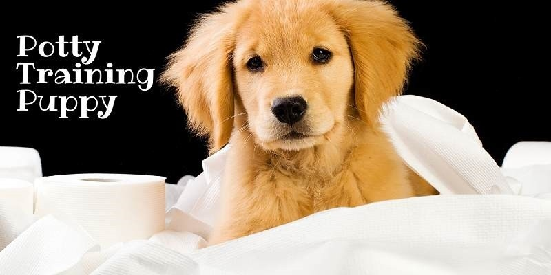 How To Potty Train Puppies The Right Way