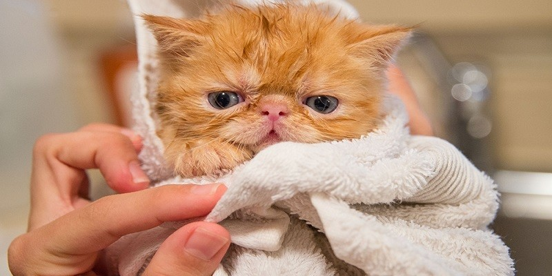 How To Bathe Your Cat