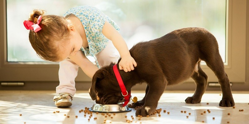 Dog Breed Is Best For Your Family