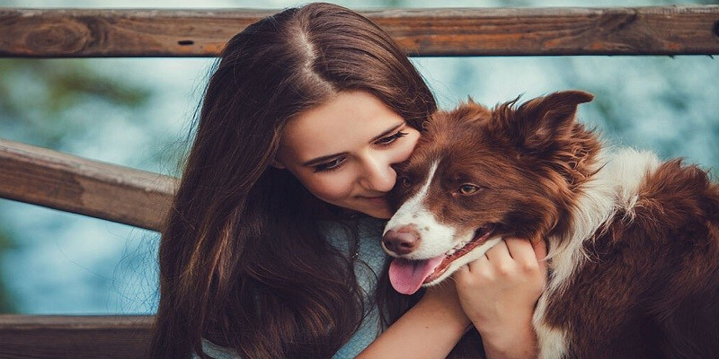 Choose The Right Dog Boarding Kennel