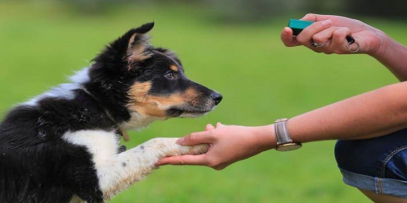 Essential Dog Training Commands