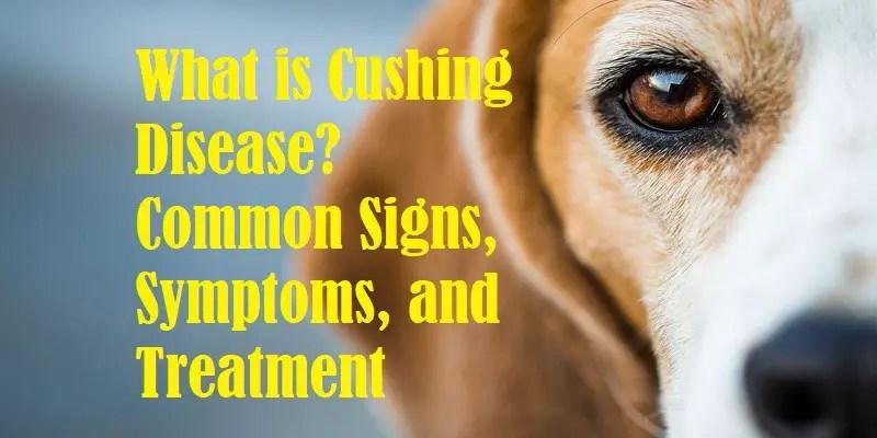 Cushing Disease