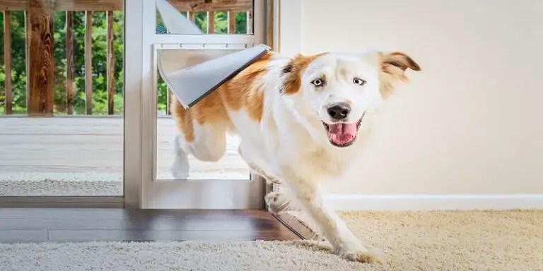 Installing a Dog Door