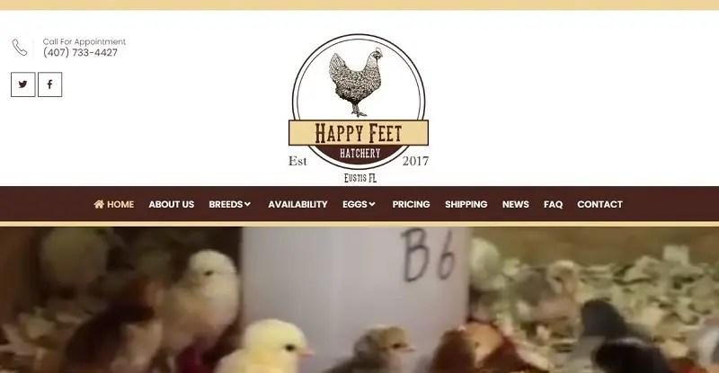 Happy Feet Hatchery